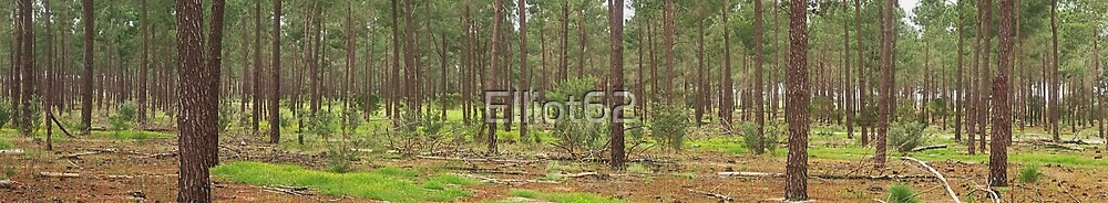 pine forest Banksia Grove by Elliot62