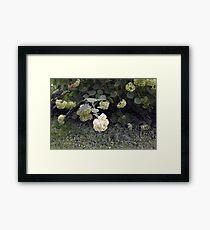 White flowers part of natural bush in the garden. Framed Print