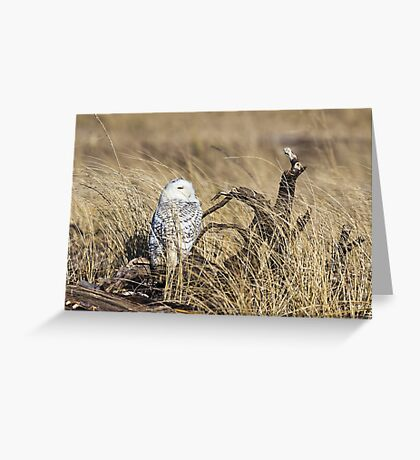 Hiding in the Grass -- Snowy Owl Greeting Card