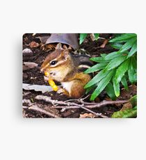 Chipmunk With Cheesy Snack Canvas Print