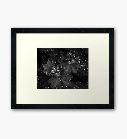 All Dressed Up With No Place To Go Framed Print
