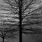 The Fog by Grinch/R. Pross
