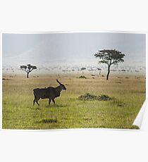 Eland in Masai Mara Poster