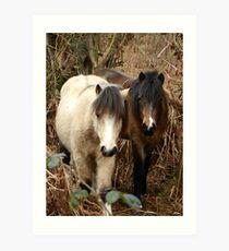 National Trust Ponies Art Print