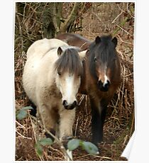 National Trust Ponies Poster