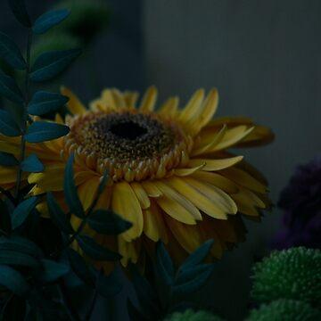 Flower Photograph by niamhk
