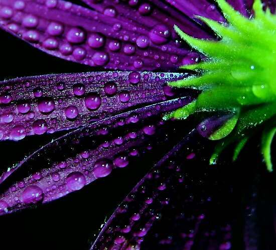Purplicious by Ingrid Beddoes