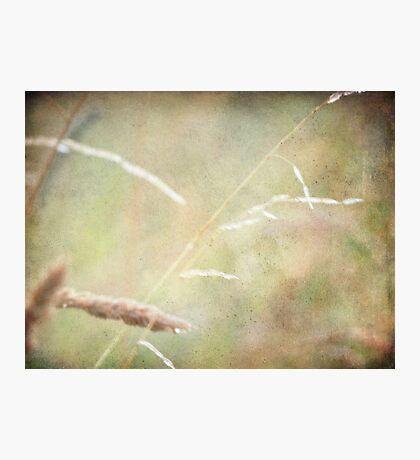 wild grasses 6 Photographic Print