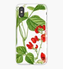 bean iPhone Case/Skin