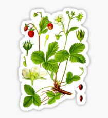 alpine strawberry Sticker