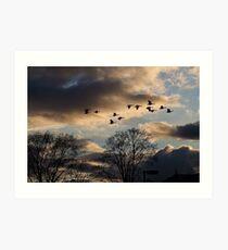 Geese Coming Home Art Print