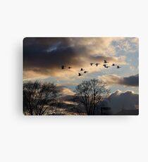 Geese Coming Home Metal Print