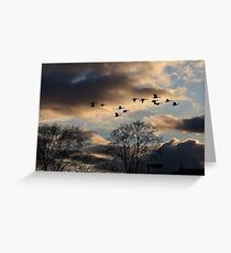 Geese Coming Home Greeting Card