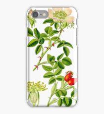rosehip iPhone Case/Skin