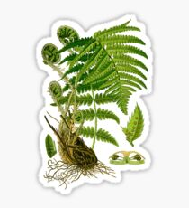 fern Sticker