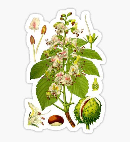 chestnut Sticker
