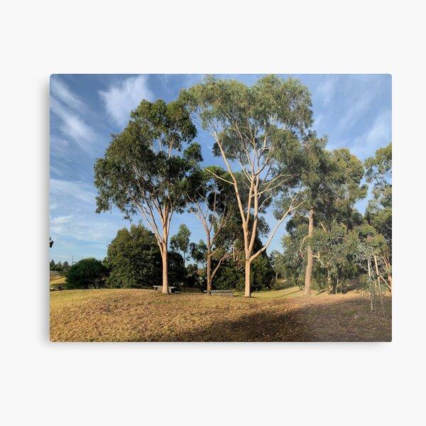 Australian Gum Trees - One Metal Print