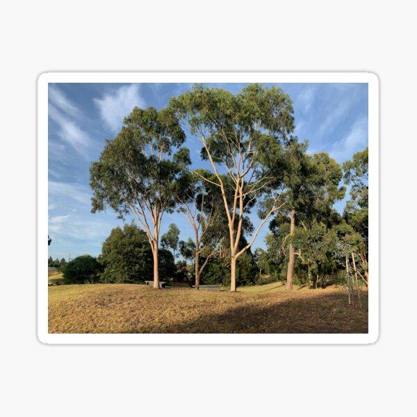 Australian Gum Trees - One Sticker