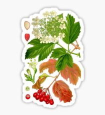 guelder rose Sticker