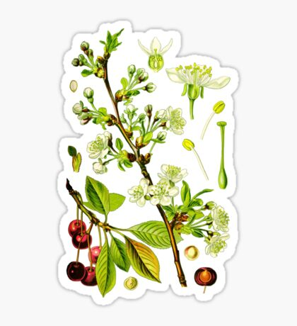sour cherry Sticker
