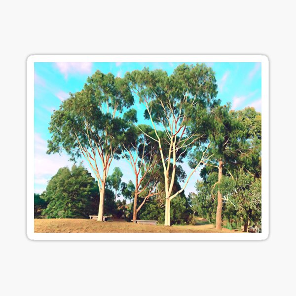 Australian Gum Trees - Three Sticker