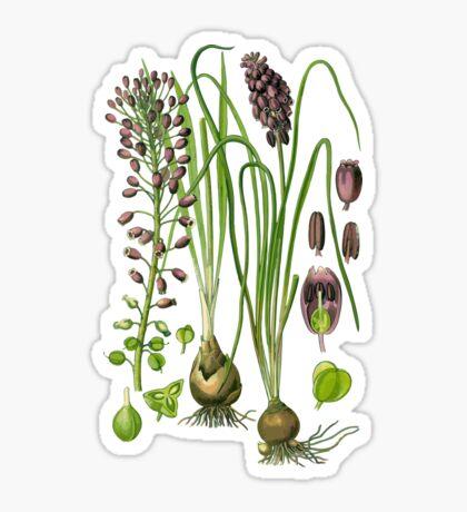 hyacinthe Sticker