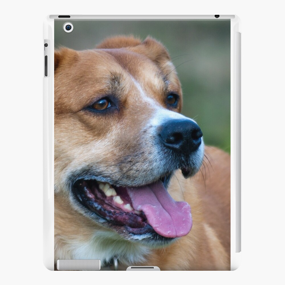 Looking for You Dog iPad Cases & Skins