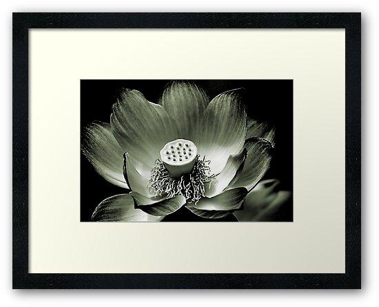 Platinum Lotus by Bob Wall