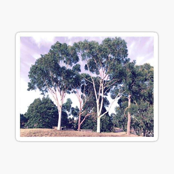 Australian Gum Trees - Four Sticker