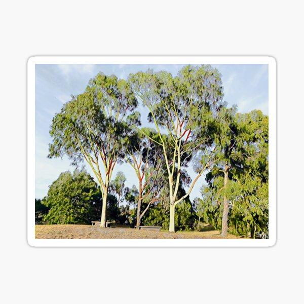 Australian Gum Trees - Seven Sticker