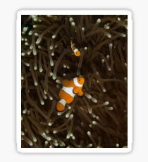 Clownfish on a White-Tipped Anemone Sticker