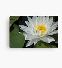 lily pad flower Canvas Print