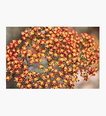 Flowers Tiny Tiny Photographic Print