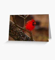 Portrait of a Redbird Greeting Card