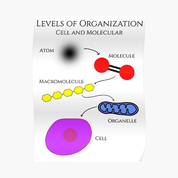 Levels of Organization, Cell and Molecular Biology Poster