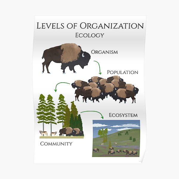 Levels of Organization, Ecology  Poster