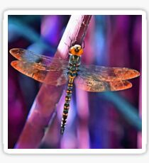 Dragonfly In Orange and Blue Sticker