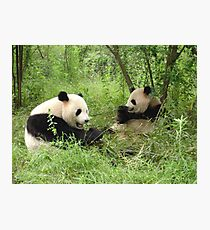 Giant Panda Research Preserve, China Photographic Print