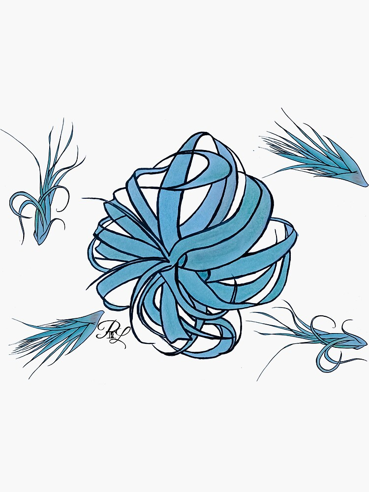 Air Plants  by PTnL