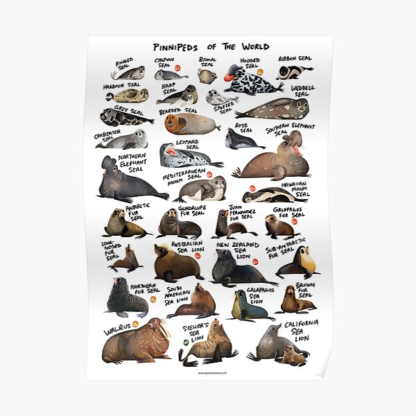 Pinnipeds of the World Poster