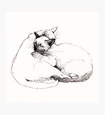 Chinky and Chang : ink drawing Photographic Print