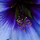 The Splendour of the Colour Purple by BaliBuddha