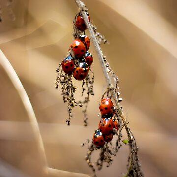 Ladybug Gathering  by InspiraImage