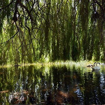 Weeping Willow by JohnGaffen