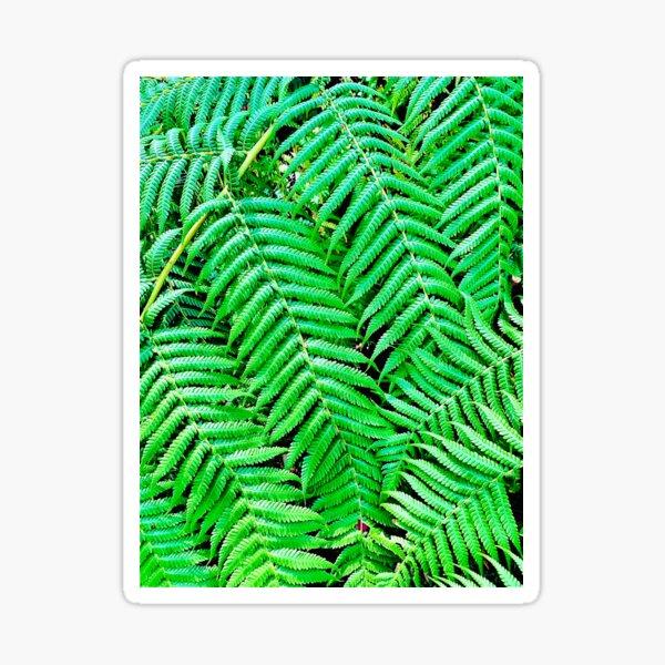 Australian Tree Ferns Sticker