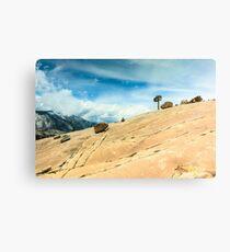 Lone Tree at Yosemite National Park Canvas Print