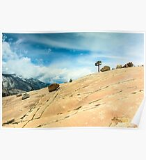 Lone Tree at Yosemite National Park Poster