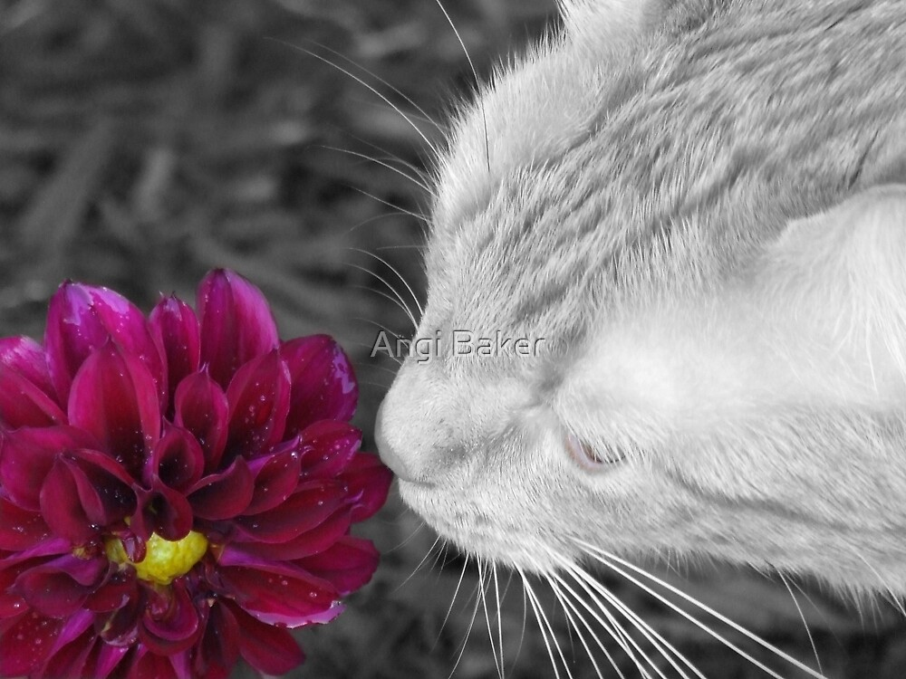 I Must Smell This New Flower by Angi Baker