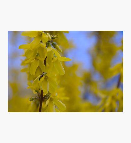 Yellow flowers near the Talvera River, Bolzano/Bozen, Italy Photographic Print