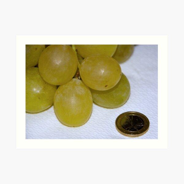 Monster Moscato grapes, Bolzano/Bozen, Italy Art Print
